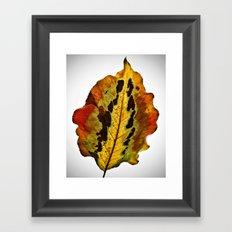 Fall Leaf Framed Art Print