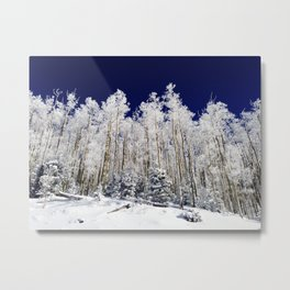 Winter Aspens Metal Print