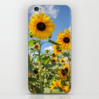sunflowers iPhone & iPod Skins featuring Sunflowers by David Tinsley
