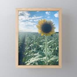Field full of sun Framed Mini Art Print