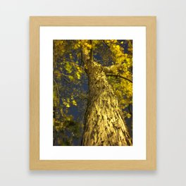 Only God Can Make A Tree Framed Art Print
