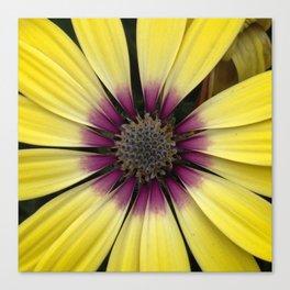 Yellow Calendula Canvas Print