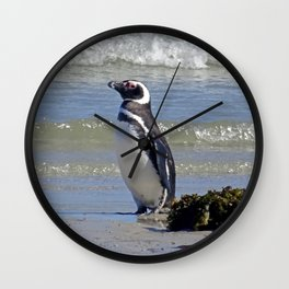 Magellanic Penguin by the Sea Wall Clock