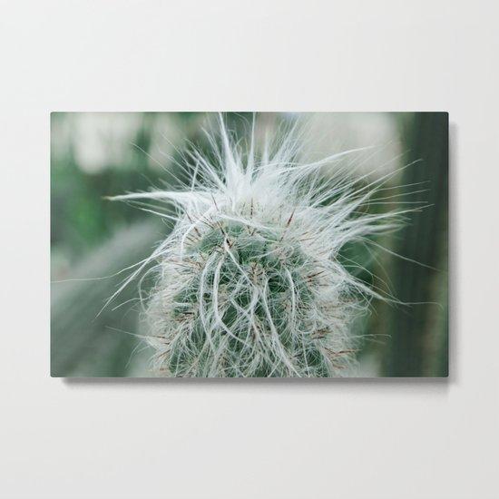 Cactus 06 Metal Print