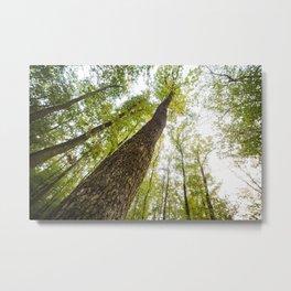 Bottom View Into The Treetops Metal Print