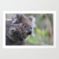 Koalas - Mother & Joey Art Print