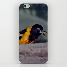 Troupial With Food iPhone Skin