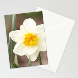The warmth of spring narcissus (lent lily) Stationery Cards