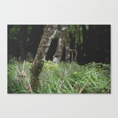 Dying Wildflower. Canvas Print