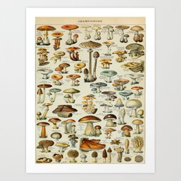 Mushrooms Vintage Scientific Illustration French Language Encyclopedia Lithographs Educational Art Print