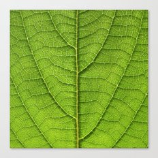 green leaf structure XII Canvas Print