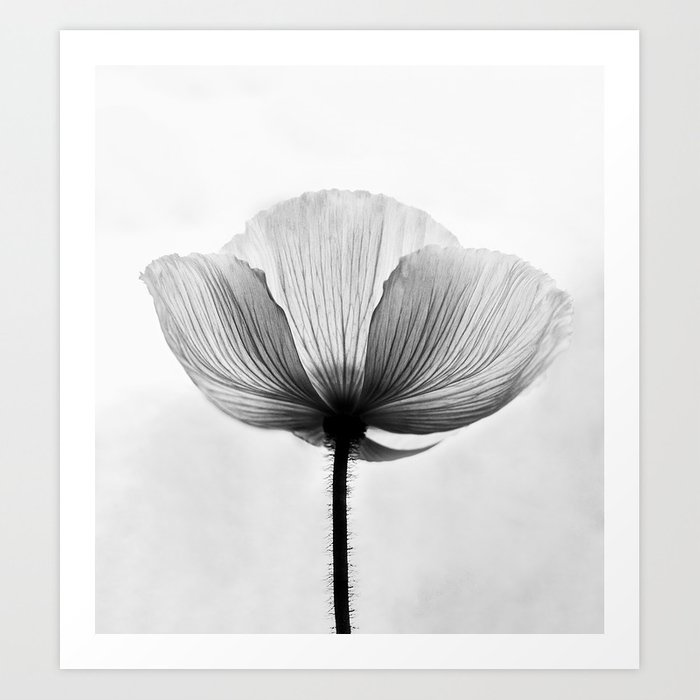 XRAY FLOWER [transparent black white poppy petals] Art Print by minime