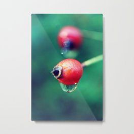 Berrys dew Dripping Metal Print