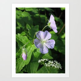 Wild Geranium Art Print