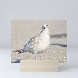 Happy Seagull Mini Art Print
