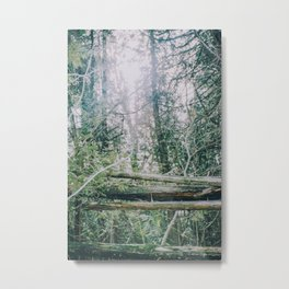 Shining through the forest Metal Print