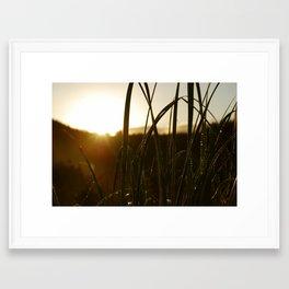 Grass in the Morning Framed Art Print