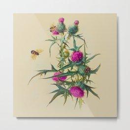 Wild Thistle & Bees Botanical Print 1800s Metal Print