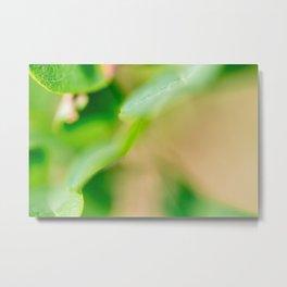 Leaf macro Metal Print