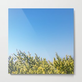 Blue sky copy space square background with coniferous fir tree Metal Print