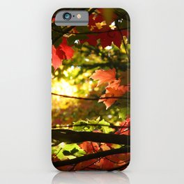 Maples in the Fall iPhone Case