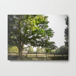 Wonder Leaves - Tree Landscape  Metal Print