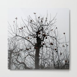 Winter's Apples Metal Print