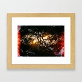 Fractal Trees at Sunset Framed Art Print