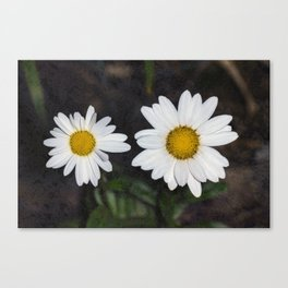 Old And Young Daisies Texture Canvas Print