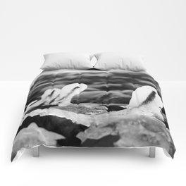 Iced Comforters