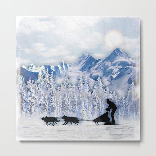 Dogsledding Metal Print