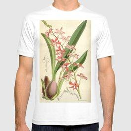 Cochlioda rosea (as Odontoglossum roseum) Curtis' 100 (Ser. 3 no. 30) pl. 6084 (1874) T-shirt
