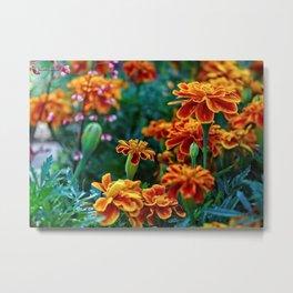 Marigold Garden Metal Print