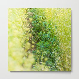 Green Fluffy Grass Metal Print