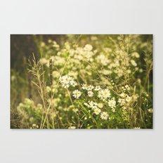 Daisies in Autumn Canvas Print