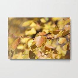 Late Fall Hawthorn Leaves Metal Print