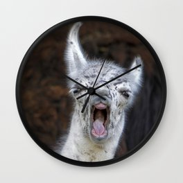 Young Lama with a big mouth | Junges Lama mit grosser Klappe Wall Clock