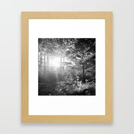 Sundown in the Forest Framed Art Print
