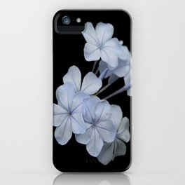 Pale Blue Plumbago Isolated on Black Background iPhone Case