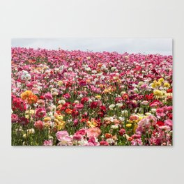 Carlsbad Flower Fields Canvas Print