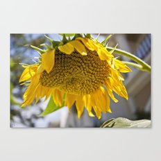 Take Cover [SUNFLOWER] Canvas Print
