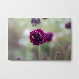 Purple Pincushion Metal Print