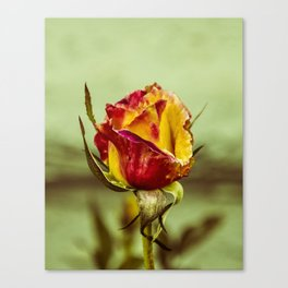 By Any Other Name Canvas Print