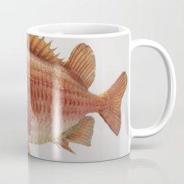 Puzzled Fish Coffee Mug