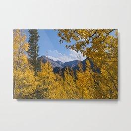 Aspens & Longs Peak Metal Print