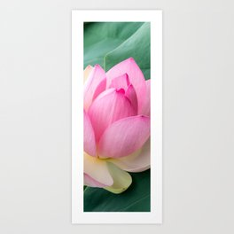 Dreamlike Soft Focus Lotus (Soft Blur Effect) Art Print