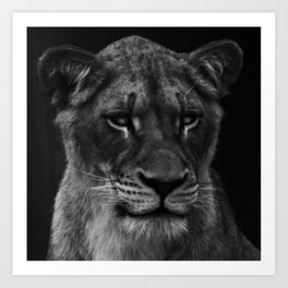 Her Majesty the Lioness Art Print