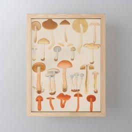 Vintage Scientific Illustration Of Mushrooms Framed Mini Art Print