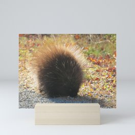 Porcupine Looking Glamorous in the Sun's Rays Mini Art Print