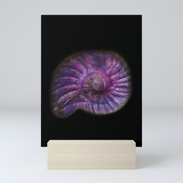 Fibonacci Ammonite Pink Fossil Sea Shell Spiral Snail Stone Pattern Vibrant Purple Shell Fossil  Mini Art Print